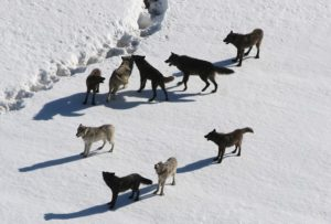 The Successful Lone Wolf—Fact or Fiction   DeltaPrimed
